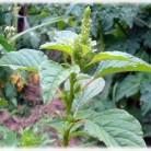 Полени и алергичен ринит - сенна хрема при децата