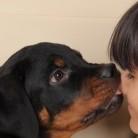 Влиянието на домашите любимци върху появата на алергии и астма при деца