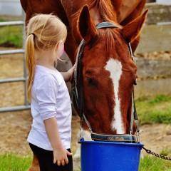 Децата, аутизмът и конете