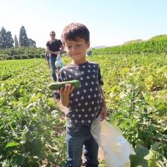 Био продукти, ГМО, пестициди – как да се ориентираме?