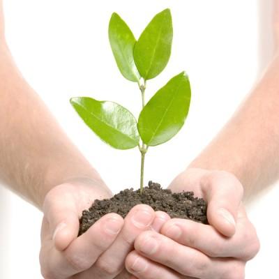Принципи на биологичното земеделие в Европа