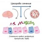Интервенционни стратегии при нарушена ос микробиота-черва-мозък след цезарово сечение