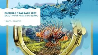 """Изложба """"Подводен свят"""" в Музейко"""